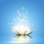 sparkling-lotus-800x800